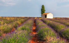 Picture field, summer, the sky, light, flowers, stones, tree, France, house, the ranks, lavender, paths, plantation, …