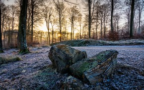 Picture winter, frost, autumn, forest, trees, branches, stones, stump, stumps, log, logs