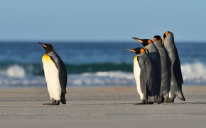 Picture sea, wave, birds, shore, one, group, penguins, surf, poses