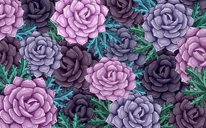 Picture roses, Flowers, Background, Floral