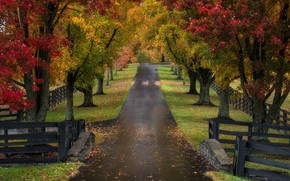 Picture road, autumn, trees, Kentucky, Road to the Roses