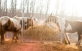 Picture autumn, light, trees, nature, horse, horse, horses, horse, hay, feeder, meal