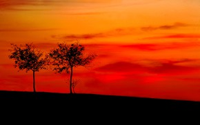 Picture trees, slope, silhouette, glow