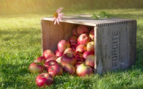 Picture box, grass, apples, flower
