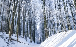 Picture winter, forest, snow
