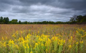 Picture field, forest, summer, the sky, clouds, flowers, clouds, overcast, yellow, meadow, space, the forest, goldenrod, …