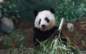 Picture look, face, leaves, branches, nature, pose, wall, portrait, bamboo, bear, Panda, sitting, zoo