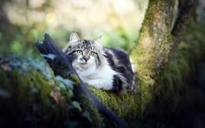 Picture cat, nature, tree