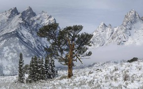 Picture snow, mountains, tree, Wyoming, USA, Grand Teton National Park