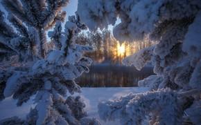 Picture winter, the sun, snow, river, tree, Altay