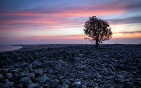 Picture sunset, tree, shore