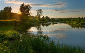 Picture summer, the sun, trees, river, Andrey Shumilin