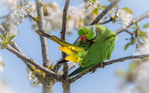 Picture flowers, branches, green, tree, bird, spring, parrot, flowering, bokeh