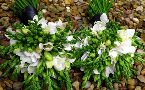 Picture flowers, snowdrops, bouquets