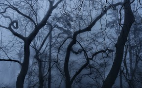 Picture forest, trees, branches, nature, fog, Portugal, Sintra