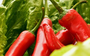 Picture greens, leaves, red, food, pepper, sharp, vegetables, salad, Chile, chili, paprika, pepper, green