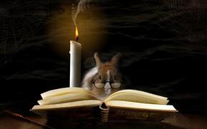 Picture magic, candle, web, rabbit, glasses, book, magic, rabbit, book, glasses, candle, spider web, alberto bissacco