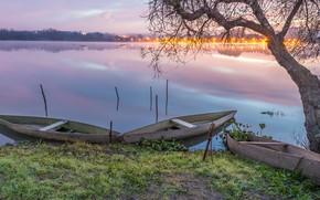 Picture grass, landscape, nature, lake, tree, dawn, shore, boats, morning, Portugal