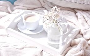 Picture comfort, tea, Breakfast, milk, Cup, tray