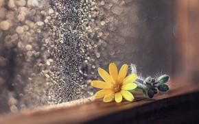 Picture flower, background, window