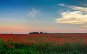 Picture greens, field, summer, the sky, clouds, trees, flowers, blue, blue, Maki, dal, horizon, space, red, …