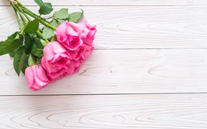 Picture background, roses, bouquet, buds