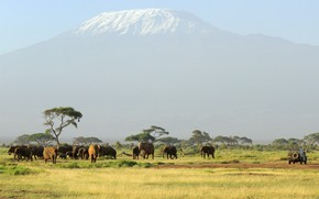 Picture mountain, the volcano, Africa, elephants, the herd, Kilimanjaro