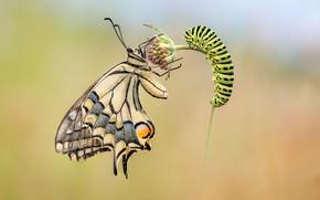 Picture flower, caterpillar, butterfly
