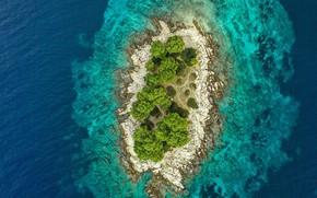 Picture trees, landscape, nature, the ocean, island, trees, ocean, landscape, nature, island