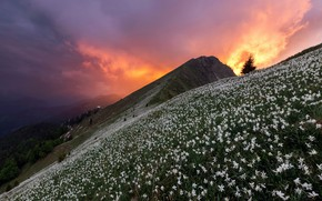 Picture sunset, flowers, mountain
