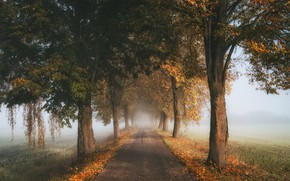 Picture road, autumn, trees, fog