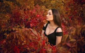Picture grass, pose, model, portrait, makeup, dress, hairstyle, brown hair, beauty, the bushes, nature, posing, in …