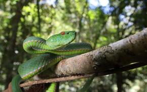 Picture branch, bokeh, green snake