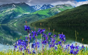 Picture flowers, mountains, river, Aquilegia