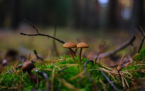 Picture autumn, forest, nature, mushrooms, a couple