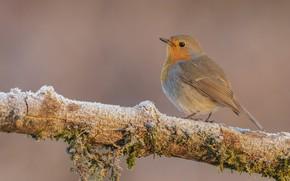 Picture photo, beak, Bird