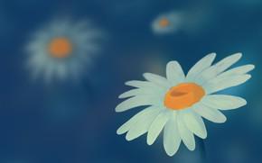 Picture figure, chamomile, wildflowers, chamomile field