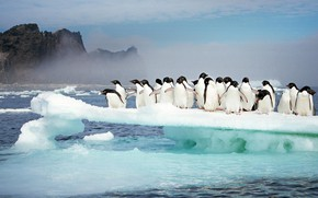 Picture ice, birds, Antarctica, adélie penguins, island Possessions