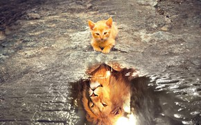 Picture cat, look, face, water, cats, reflection, kitty, photoshop, Leo, puddle, baby, red, waiting, face, reality