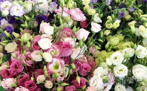Picture flowers, bouquets, Eustoma