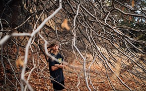 Picture branches, tree, boy