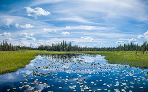 Picture forest, leaves, lake, pond, shore, ate, pond, blue sky