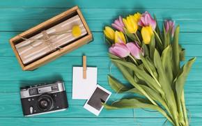 Picture retro, gift, bouquet, the camera, tulips, Ana Lukenda