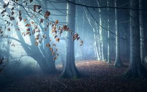 Picture forest, leaves, light, trees, night, branches, nature, fog