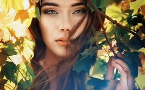 Picture look, leaves, girl, Saulius Krušna
