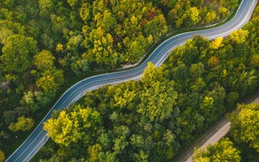 Picture road, forest, Lithuania, winding