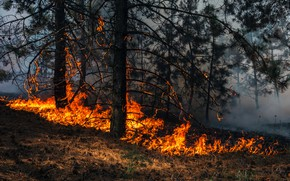 Picture fire, trees, smoke, forest fire