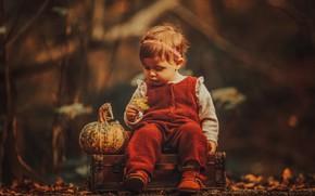 Picture autumn, nature, sheet, girl, pumpkin, suitcase, jumpsuit, baby, child
