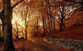 Picture falling leaves, autumn trees, asphalt road