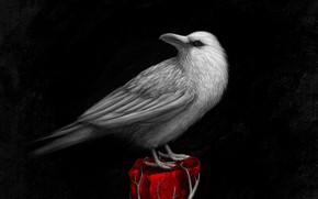Picture bird, art, Raven, bird, raven, art